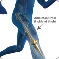 Adductor/groin anatomy